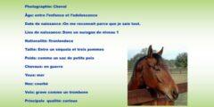 تعبير كتابي عن الحصان بالفرنسية للسنة الخامسة ابتدائي